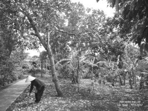 Vườn cây ăn trái ở Lộc Ninh -  Les jardins de Loc Ninh 2013 - Photo Mathilde Tuyet Tran