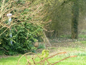 Đố ai nhìn thấy cô gà đồng mái trong bụi cây ?Photo: Mathilde Tuyet Tran 2013