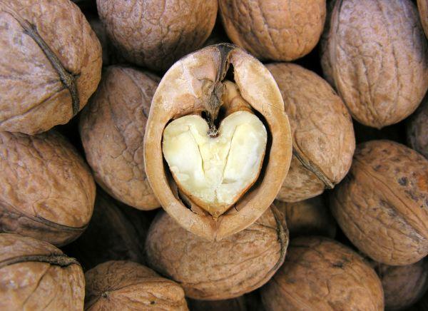 les-fruits-coques-bonnes-pour-coeur